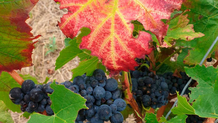 BPA Vigneron Bio, produit vos propre vin en bio-dynamique, BPA Caviste