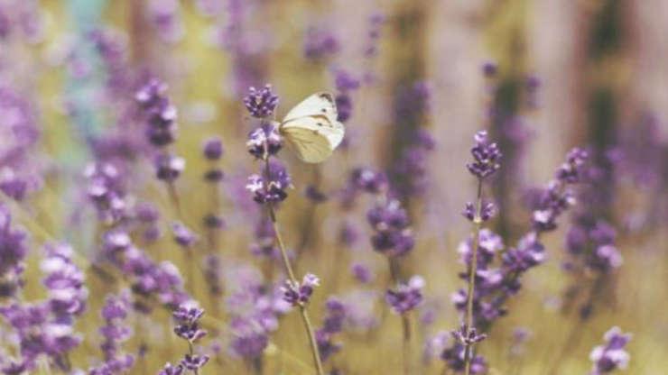 CS Aromathérapie, avec des plantes Bio