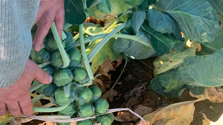 BTSA Producteur maraîcher artisanal légumes colorés