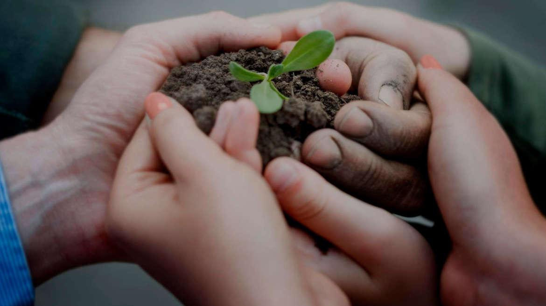 BAC pro Arboriculture; Installer un atelier de production des petit fruits Bio dans la ferme « agriculture consciente »