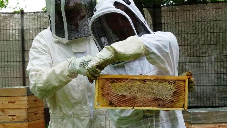 BAC Pro Apiculture, production du miel Bio pour un projet d'installation, atelier «un ruche conscient en famille»