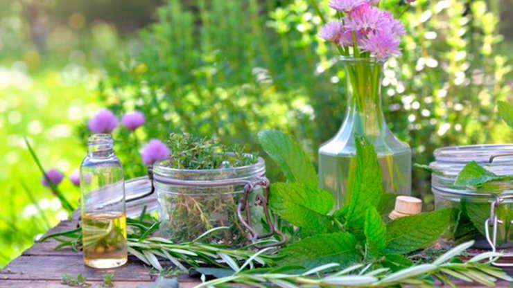 CS PPAM Bio, transformation, production de plantes aromatiques et médicinales, tisanes, huiles, cosmétique